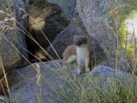 hike-animals-pyrenees